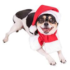 Clever Creations Disfraz navideño para Perros - Ideal para Casi Todas Las Razas